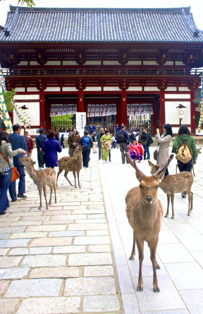 sika deer/bowing deer